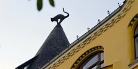 Cat Roof Riga Latvia