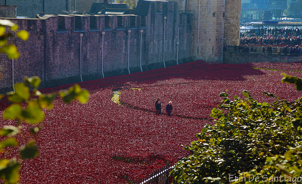 Ceramic poppies fill the entire moat around the Tower of London.