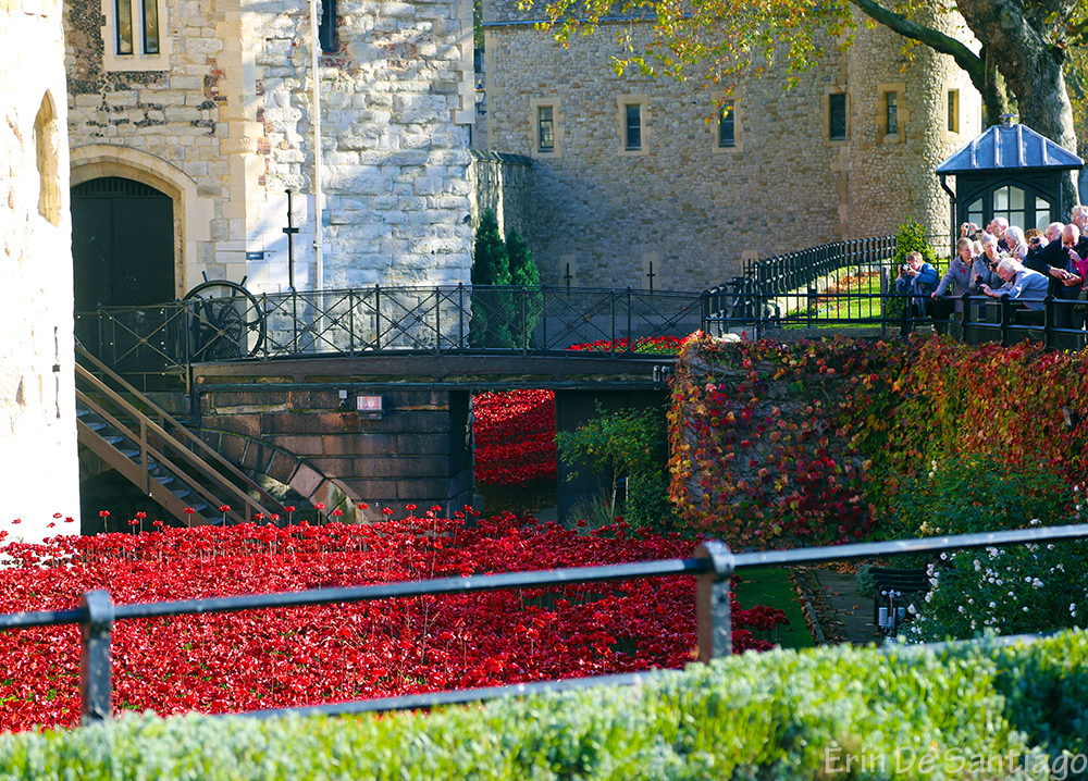 Ceramic poppies surround the Tower of London.