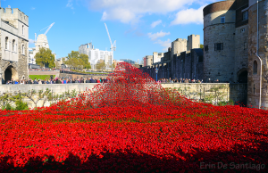 The Tower of London Poppies Installation