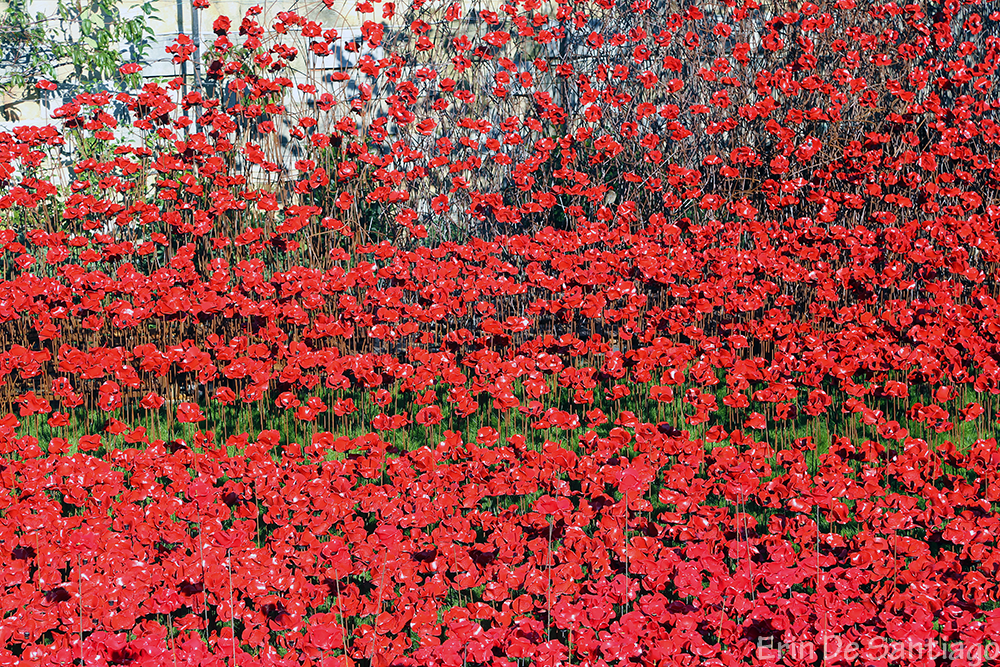 Nearly 887,000 poppies filled the Tower of London moat.