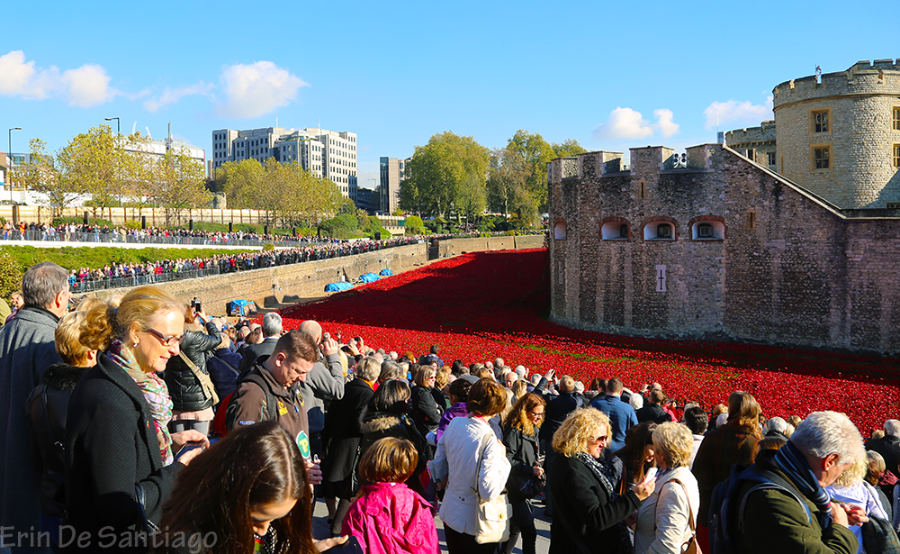 Beautiful day to see the poppies at Tower of London