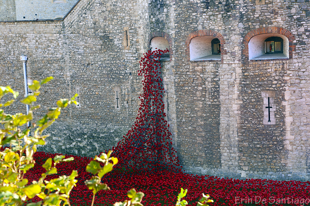 Poppies flowing out of a tower window symbolizing the blood spilling from fallen soldiers.